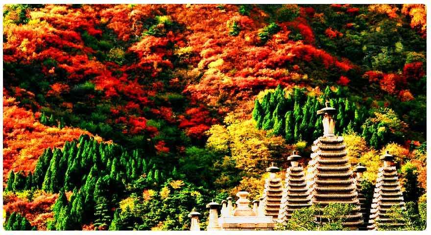 【北京秋季爸妈五天游】北京天安门广场、毛主席纪念堂、故宫、颐和园、香山公园,钓鱼台赏银杏双飞五天游