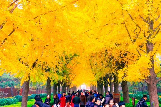 【北京奢华六天游】 天安门广场、毛主席纪念堂、人民大会堂、故宫、八达岭长城、奥林匹克公园、鸟巢水立方外观双飞六日游